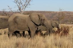 Through My Lens: South Africa